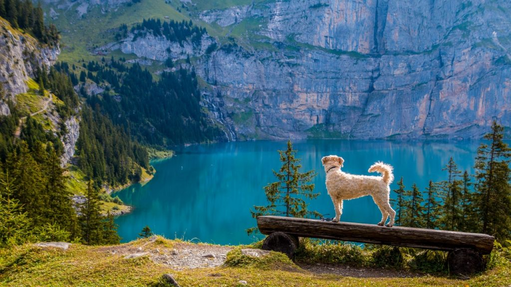 How To Include Your Dog In Your Summer Vacation