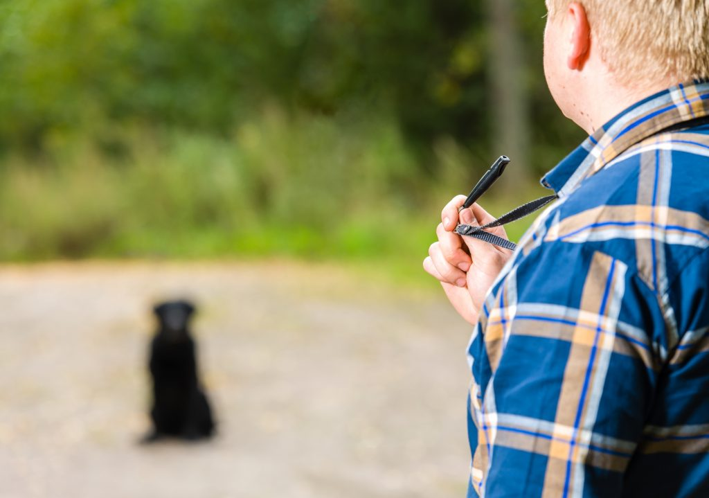 Top 5 Best Whistles for Blissful Dog Training